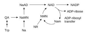 neurotransmitter restoration